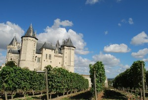 Image of vineyards by Chateau Saumur